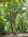 Route du Faîte (forêt de Montmorency) - panoramio.jpg