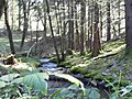 Ruisseau du Nideck - panoramio (2).jpg