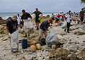 Sailors clean a beach in Diego Garcia..jpg