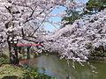 Sakura in Hirosaki Castle 20160423.jpg