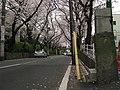 Sakurazaka 04.jpg