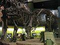 Saurophaganax from the late Jurassic.jpg