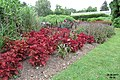 Savill Garden (36529231233).jpg