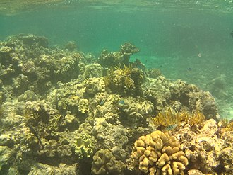 Great Barrier Reef - Underwater image of Saxon Reef.