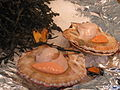 Scallop dishes on a market in Paris.jpg