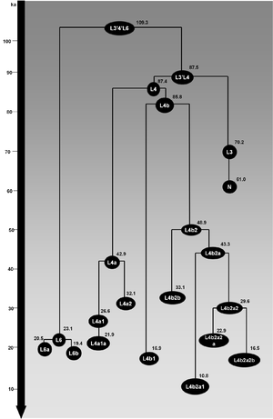Haplogroup L4 (mtDNA) - Schematic tree of mtDNA haplogroup L4. Ages (in ka) indicated are maximum likelihood estimates obtained for the whole-mtDNA genome.