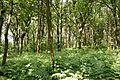 Schleswig-Holstein, Windbergen, Landschaftsschutzgebiet Wodansberg NIK 6739.JPG