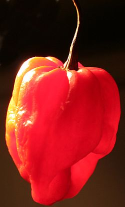 Scotch-bonnet.jpg
