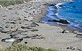 Sea Lion Spa (29058403).jpeg