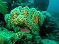 Sea anemone (5335812496).jpg