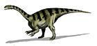 Plateosaurus gracilis