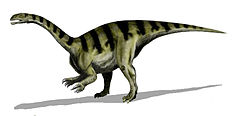 Sellosaurus gracilis