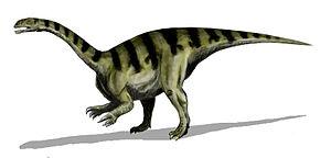 Mesozoic - Plateosaurus (a prosauropod)