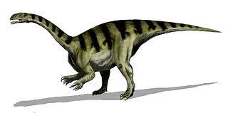 Sauropodomorpha - Plateosaurus is a well-known prosauropod