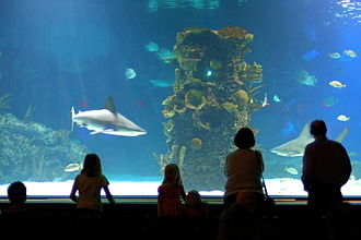 Newport Aquarium - Image: Sharktank at Newport Aquarium