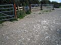 Sheep shearing pen - geograph.org.uk - 567371.jpg