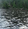 Shiny lake in the national park of Mauricie - panoramio.jpg