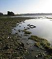 Shoreline at Rutland Water - geograph.org.uk - 1067397.jpg