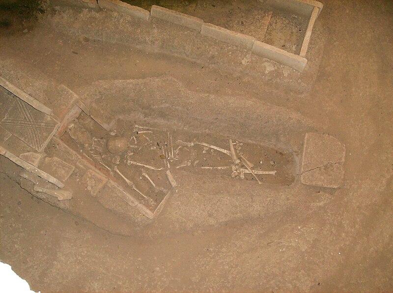 File:Skelet.jpg