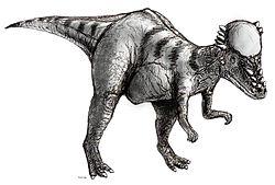Dessin d'un pachycéphalosaure