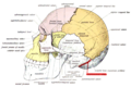 Sobo 1909 39 - Occipitomastoid suture.png