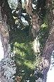 Sobreiro do Largo da Igreja - Parada de Todeia, Paredes - 15.jpg