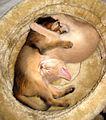 Somalis lièvre et faon.jpg