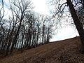 Sovetskiy rayon, Bryansk, Bryanskaya oblast', Russia - panoramio (424).jpg