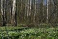 Spring in Olgino 2020-05-01.jpg
