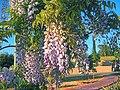 Spring in Ra'anana park.jpg