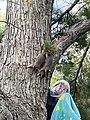 Squirrel king.jpg