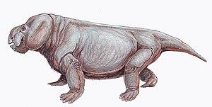 1935 in paleontology - Stahleckeria