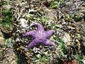 Starfish1456.jpg