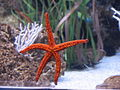 Starfish Aquarium Barcelona1.jpg