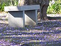 Starr-100602-6659-Jacaranda mimosifolia-flowers on ground with bench-5 Trees Pukalani Kula Intersection-Maui (24946143141).jpg
