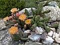 Steingarten Kaktus.jpg