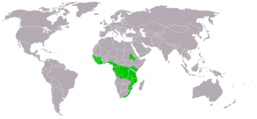 Stephanoaetus coronatus distribution map big.png