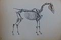 Stubbs Anatomy of the Horse (14).JPG