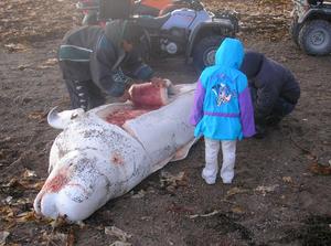 Aboriginal whaling - Image: Subsistencewhaling