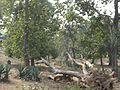 Sundargarh, Odisha, India - panoramio (4).jpg