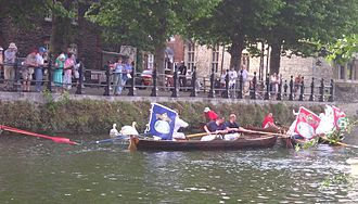 Swan Upping - The skiffs surround the swans so that they can be more easily caught.