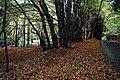 Symond's Wood - geograph.org.uk - 411361.jpg