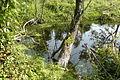 Szymanowo Grzybno Canal (Grzybno arround) (3).JPG