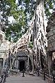 Ta Prohm - Angkor (6208377234).jpg