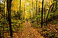 Team on the trail (1538873715).jpg