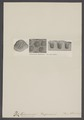 Tetracaenia - Print - Iconographia Zoologica - Special Collections University of Amsterdam - UBAINV0274 007 03 0021.tif
