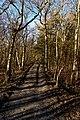 Texel - De Dennen - Nature Path 'Alloo' - View North on Horse&Cart Trail.jpg
