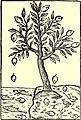 The American garden (1891) (17528186163).jpg