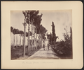 The Amir's Garden, Jalālābād WDL11478.png