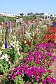 The Flower Fields at Carlsbad Ranch 10 2014-04-28.jpg